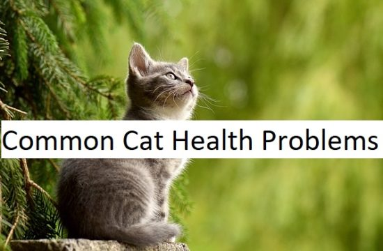 common cat health problems