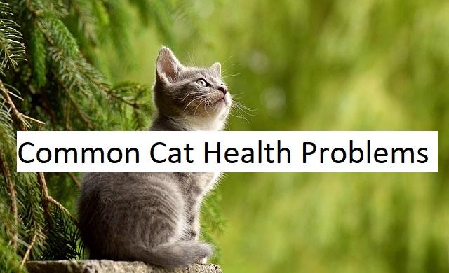 common cat health problems