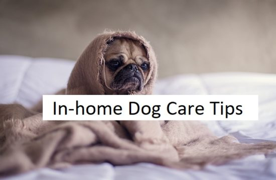 In-home dog care tips