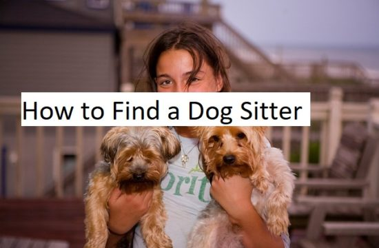 Find a dog sitter